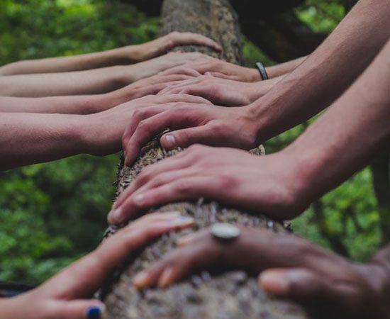 tree test4